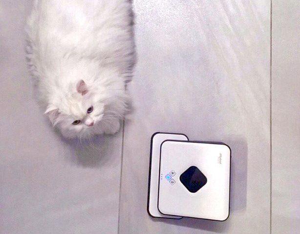 котка, чистене, тобиас