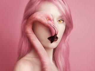 flamingo-5911dc2da7baf__880