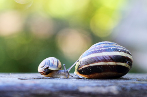mother and baby snails