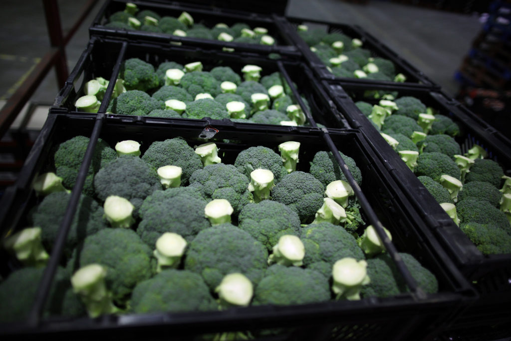 WALTHAM ABBEY, ENGLAND - DECEMBER 06:  Trays of broccoli await collection from Sainsbury's Waltham Point distribution depot on December 6, 2011 in Waltham Abbey, England. The depot is the largest of 23 operated by Sainsbury's to service their stores. 1200 people work in the 700,000 square foot building which makes over 1800 deliveries a week to the 83 stores in the London, Hertfordshire and Essex region.  (Photo by Peter Macdiarmid/Getty Images)