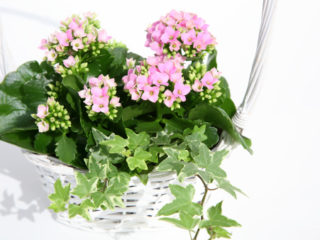 White basket of spring flowers with foliage