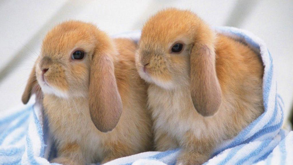 зайци