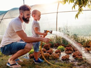 Father and son in garden,watering salads.