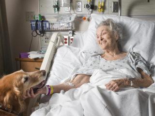 възрастна жена, болница, куче