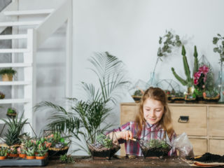 DIY florarium. Home gardening hobby. Girl enjoying planting and growing succulents in glass geometric vases.