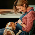 Middle aged smiling pregnant freelancer sitting in her office and looking at her beloved beagle. Beagle wants to play with her.