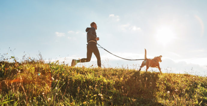 Canicross exercises. Man runs with his beagle dog at sunny morning