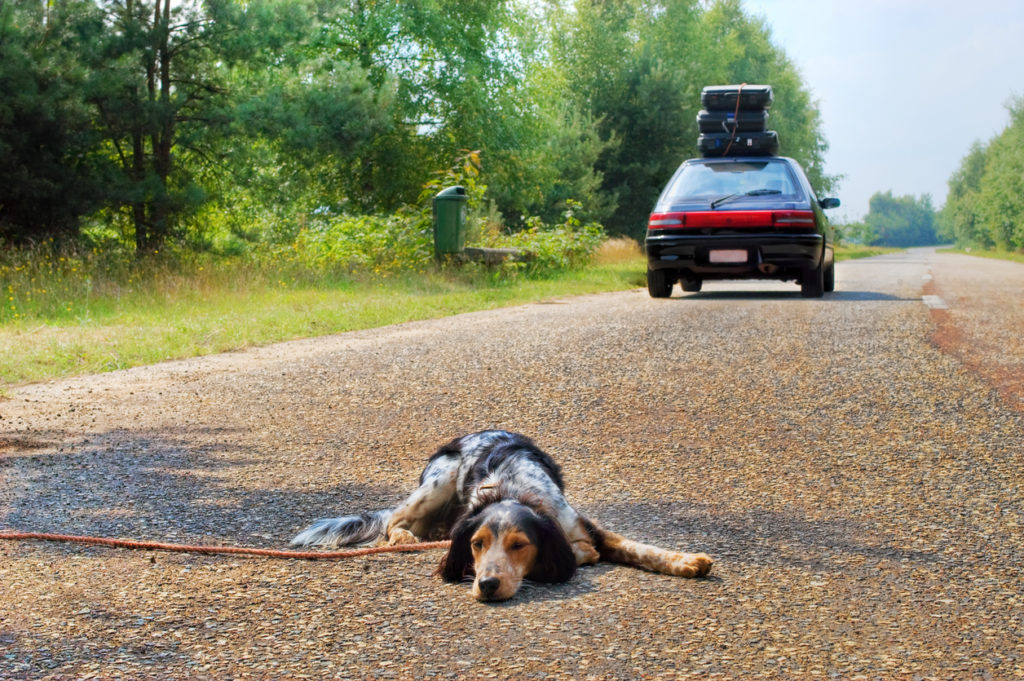 Dog left behind while it's owners leave for a vacation